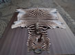 Dekorativ Zebra - Gerberei Polen