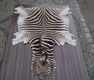 Sch�n Zebra - Gerberei Polen