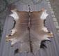 Springbok- Gerberei Polen