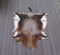 Naturfelle Ziege- Gerberei Polen