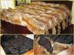 fox_carpet-Tannery, tanning of skins