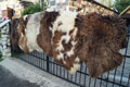 holland_sheepskin-Tannery, tanning of skins