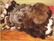 Viele Schaffelle - Gerberei Polen
