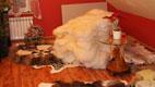 Wei�e Schaffelle und Teppich - Gerberei Polen